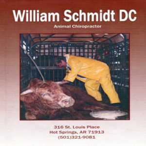 Schmidt BULLS DVD Cover